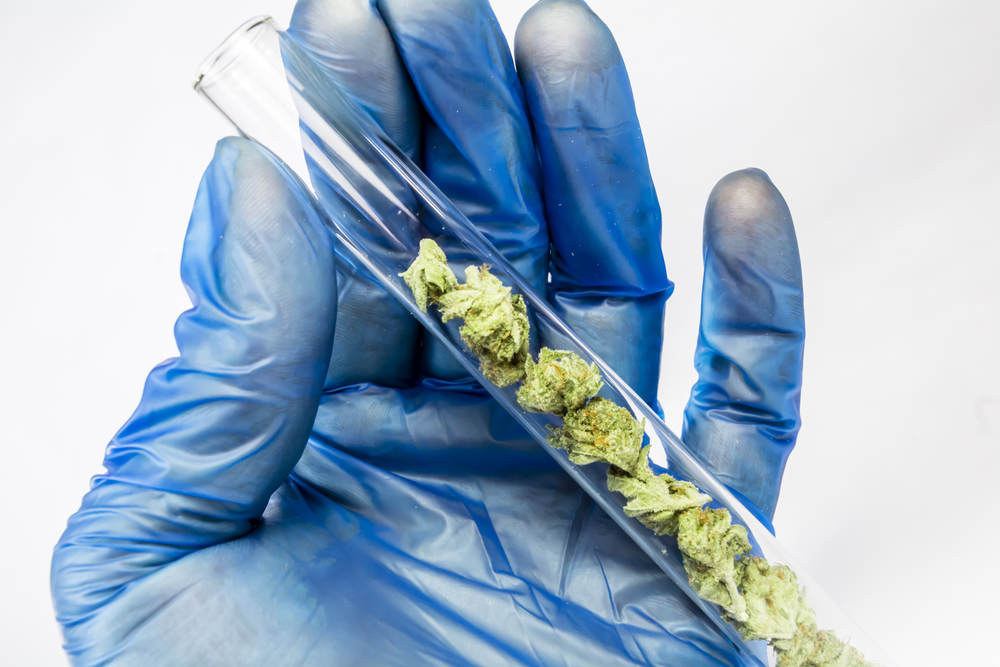 Cannabis Research Licence Paves Way for Knowledge Translation From ND to MD