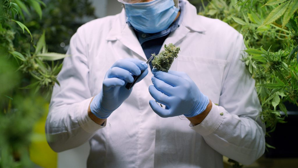 Cannabis and COVID-19 – Considerations to be Made in Regards to your Business, Staff, and Facility